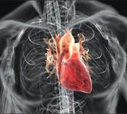Cardiovascular system - Dr Vorobjev