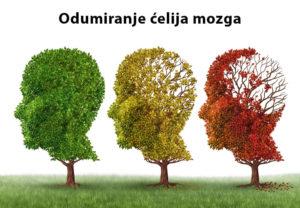 izmiranje ćelija mozga kod alkoholičara