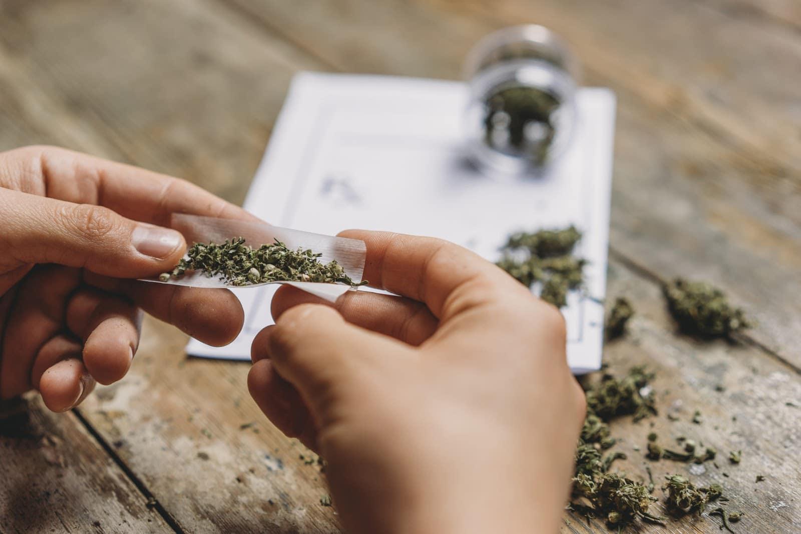 Zavisnik od kanabisa mota marihuanu da bi je pušio i zloupotrebljavao.